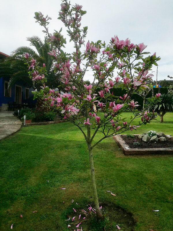 Árbol en floración